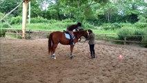Equitation - Cours de Saut d'Obstacle - Rodéo et chute