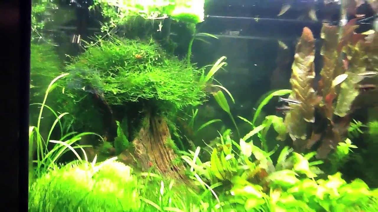 Shrimp tank update