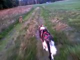 Siberian Husky Alma Bike-Dog Training Bikejoring