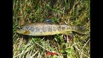 Pêche de la truite fario en mai au toc et au vairon dans des ruisseaux des Pyrénées, mai 2014.