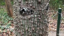 Honduras Copan Ruinas Copán Ruinas Las Ruinas de Copan Weltkulturerbe der UNESCO