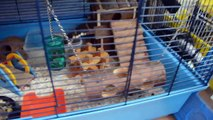 MY HAMSTERS *(Past Hamsters From 2012)*