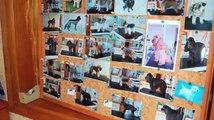 Espace Canin - Salon de toilettage pour chiens et chats - Baye - Finistère