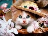 CHÓ MÈO Cùng Hát cực dễ thương vui nhộn hài hước - Ca Khúc Lồng Tiếng Chó Mèo độc đáo nhất