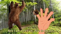 Finger Familly Daddy Finger Grizzly Forest Animal | Bear Cartoon | Nursery Rhymes For Children in 3