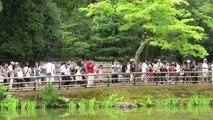 Kyoto (Kinkakuji 金閣寺 The Golden Pavilion)