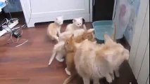 Mother Cat fail at jump and scares her Kittens