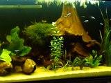 Moje Akwarium Biotop Ameryka Południowa SA