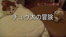 チュウ太の冒険【完全版】  猫と人形アニメーション  Cat and StopMotion