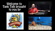 "How many fish can I put in my aquarium? Tank Talk ""revisited"""