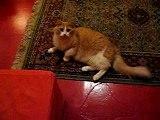 Cats / chats - Peanut & Chestnut 1