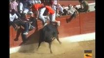 Cogidas de Toros 4 Videos de Toros Bravos