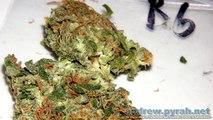 The Highlife (Cannabis) Cup 2012 - The Bio Category Entries (Photos)