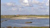 Kolonie grote sterns in natuurgebied De Petten op Texel