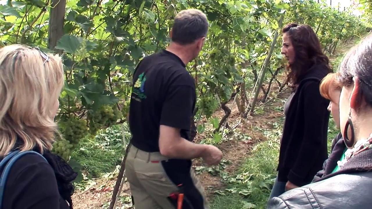 REWE-Richrath: Weintrauben von Landwirt Gerd Moog aus Meckenheim