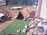 First hunt Test Basset Hound Puppies- 9 weeks.wmv
