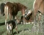 Storie di cani (e di altri animali): Niki e i cavalli