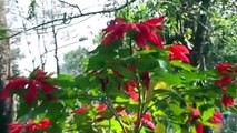 Des jardins de Chiang Mai en Thaïlande