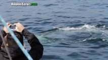 """Gray Whales Get """"Lucky"""" on St. Patrick's Day in Front of Dana Point Whale Watching Boat"""