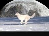 Wolf's Rain - Gravity