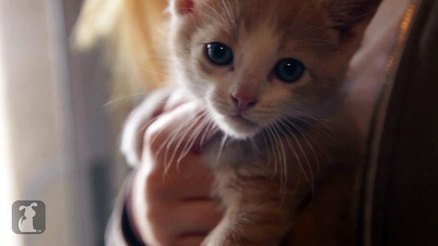 Cutest Shy Rescue Kitten Is A Beautiful Angel