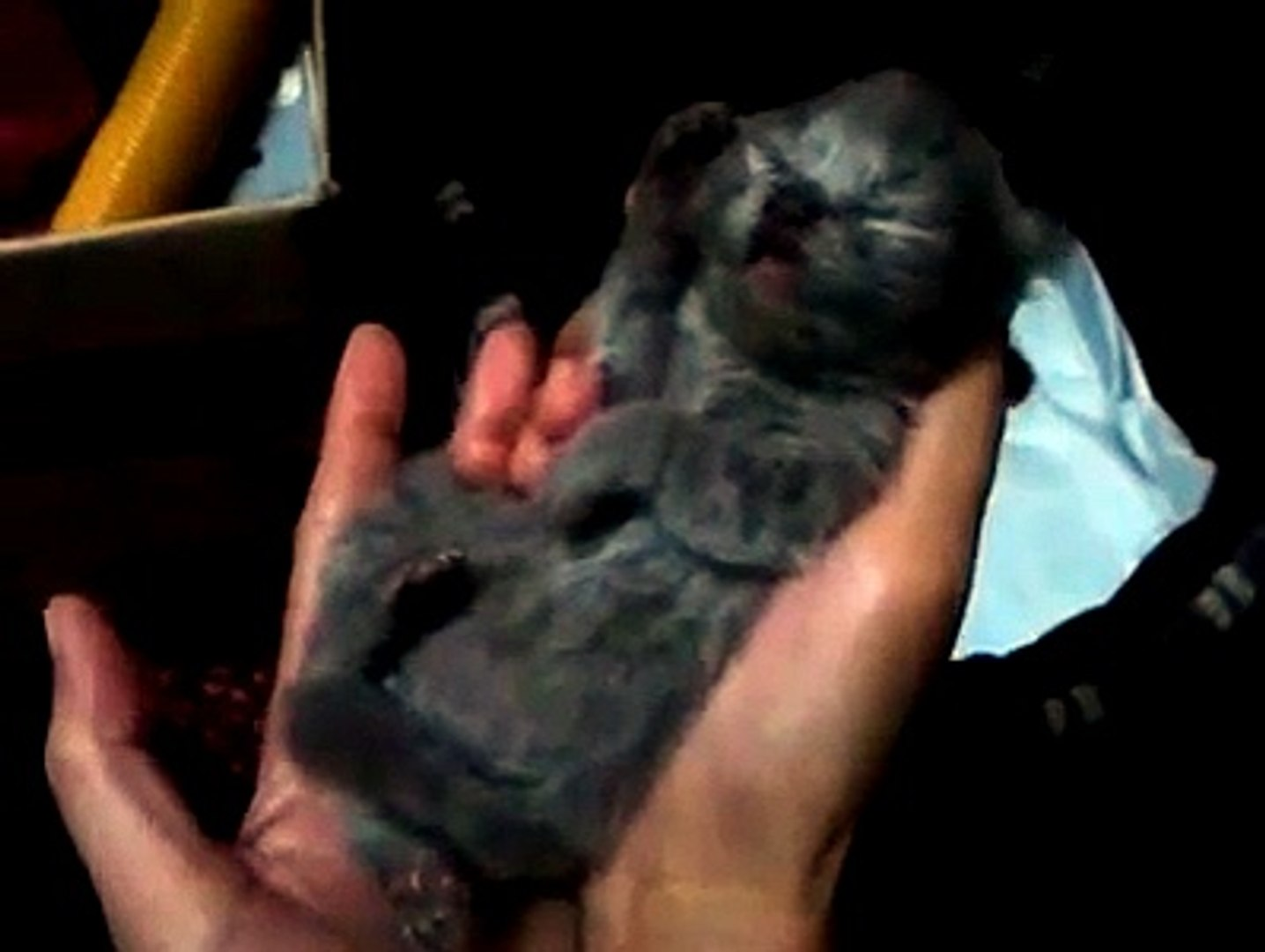 FUNNY VIDEOS: Funny Cats - Cute baby Cats - Baby Cats Video - Baby cat Sleep - Baby Cats 2014