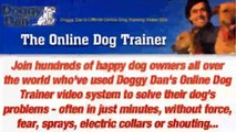 Dog Body Language - Dog Calming Signals