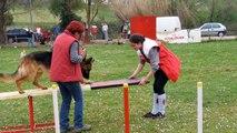 Club des Amis Canins d'ASTAFFORT : l'Agility