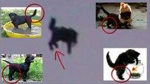 UFO abducts a cat in Moscow Russia - OVNI Rapta un gato en Rusia 07062015 НЛО, UFO, UFOs, Чупакабра, собака, волк, полё