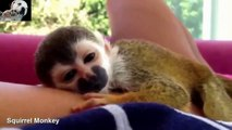 Awesome Funny and Cute Babies Animals Compilation 2014