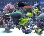 6 metres reef tank Aquarium recifal