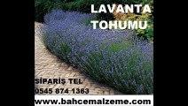 lavanta-tohumu-satış,lavanta_tohumu_satış,lavanta tohumları,lavanta üretimi,lavanta yetiştiriciliği,lavanta_yetiştiriciliği,lavanta çiçeği,lavanta_çiçeği
