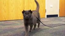 Ce chat a 4 oreilles : trop marrant