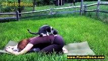Mascotas interrumpiendo Yoga - Animales Divertidos