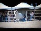 L'équitation est un sport, une passion, une vie !