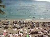 Hawaii Hotels royal Hawaiian Luxury hotel 5 star beach hotel