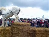 formidable chevaux boulonnais !