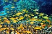 Puntos de Inflexión Ecológica - Salvando un Arrecife Coralino (La Isla Apo, Las Filipinas)