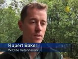 Animals Suffer from Australias Bushfires