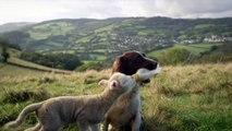 Un chien nourrit un agneau avec une bouteille de lait