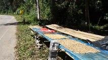Voyage dans le nord de la Thailande: Decouverte de la nourriture locale