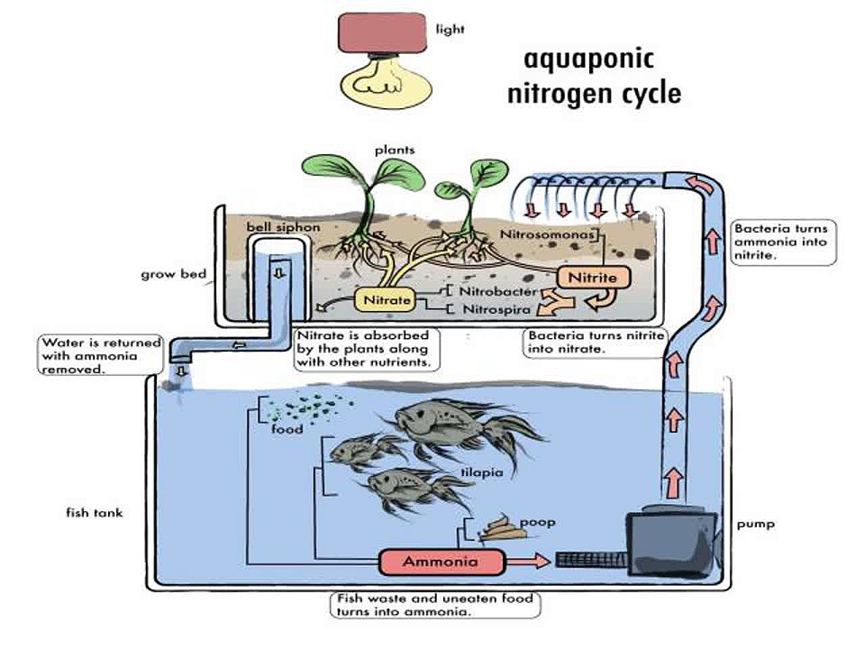 Home DIY Aquaponics