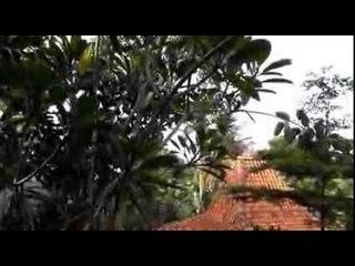 Teaser: Hutan Tropis di Tengah Kota
