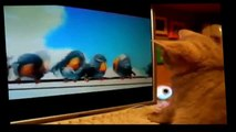 Funny Cats   Funny Animals Videos   Funny Dogs   Funny Animals Compilation 2015   Funny Vines Cats