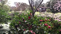 San Marino, California - Huntington Botanical Gardens Japanese Garden HD (2014)