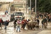 Géorgie : Les animaux d'un zoo se sont échappés après des inondations