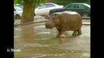 Des animaux du zoo de Tbilissi s'échappent après les inondations meurtrières en Géorgie