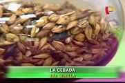 Doctor en Familia -  Beneficios de la chía y la cebada - 13/06/15