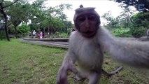 Cheeky Monkey Takes Selfie With Tourist