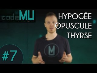 Code MU #7 - HYPOGÉE, OPUSCULE, THYRSE (Feat. Indiana Jones !)